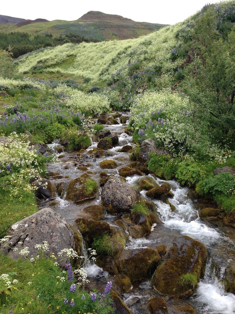 Mount Esja Trail